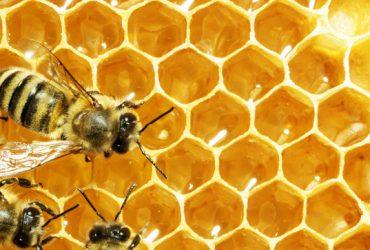 آموزش صحیح در زنبورداری